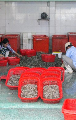 Sorting the daily catch