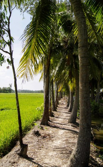 Little path along the rice paddies