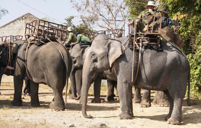 Elephants waiting for paying tourists - the trreatment by some mahouts was shockingly bad