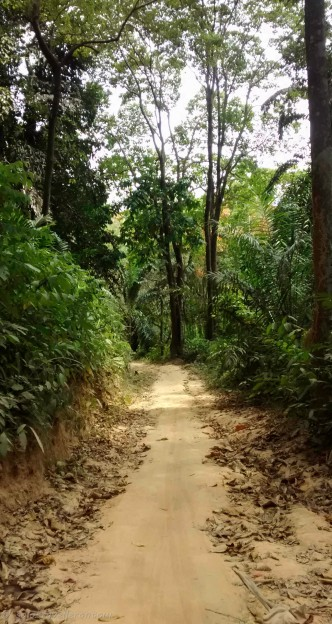 The dirt road towards the beach