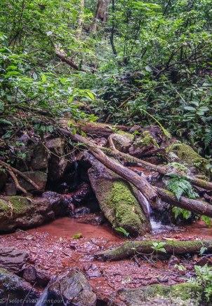 Hiking through the Jungle