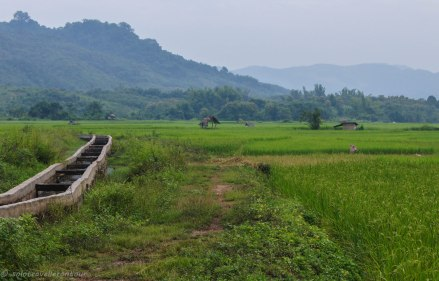 Rice field with irrigation system