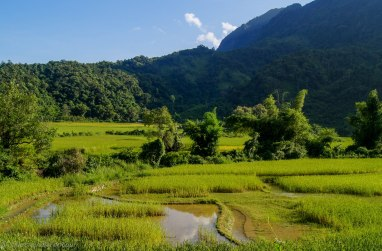 Rice fields everywhere