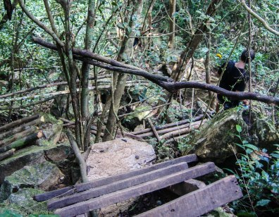 A bamboo path up the hill