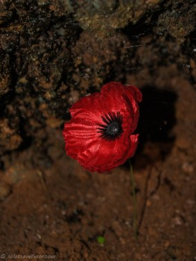Reminder of the Remembrance day