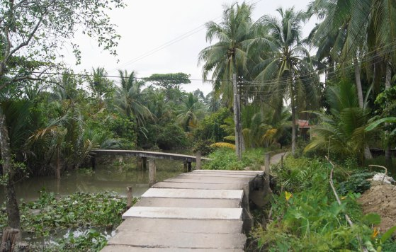 Bridges and little path lead through the area