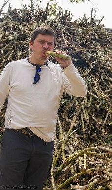 Eating raw sugar cane....quite tasty