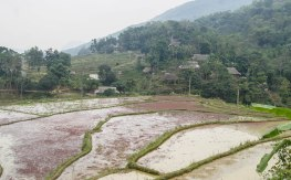 Rice paddies and little villages