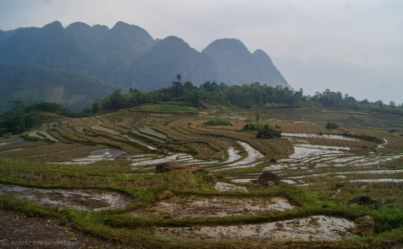 Rice paddies inside the National Park