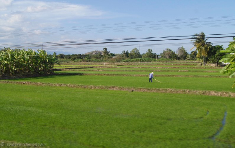 Green rice fields - great change to the muddy ones