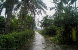Little path on the island