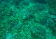 Corals and sea stars