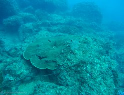 Some of the corals seen underwater
