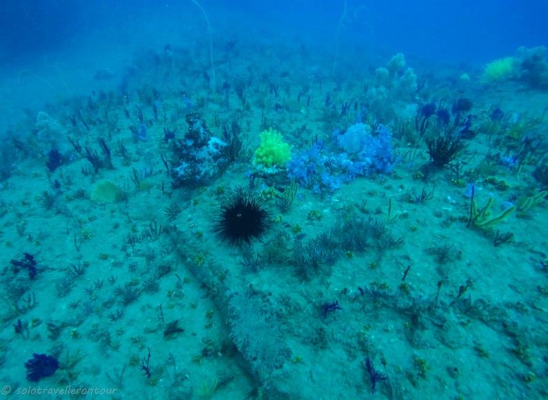 Dive site near Cham Island