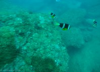 More colourful fish seen- some of them bit me