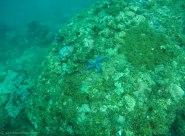 Sea stars and corals