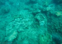 Little corals