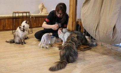 The Ailu Cat Cafe