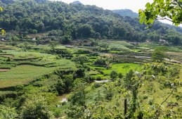 One of the lovely rice terraces along the road