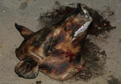 Barbequed pig head