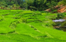 After all the mountains green rice fields welcome you