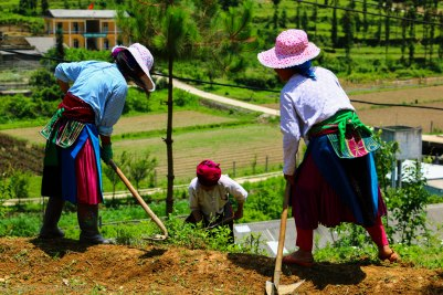 Local farmers working hard in the heat - but still smiling at strangers