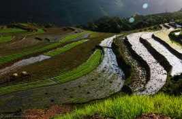Rice terraces, water buffalos and farmers - perfect summary of Vietnam