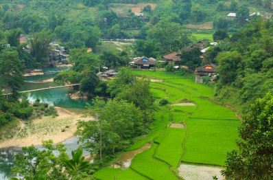 A little village along a blue river and surrounded by green rice fields - welcome to rural Vietnam