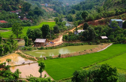 Villages and rice fields are commen sights in the north-east