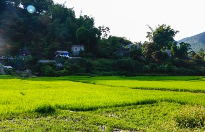Rice paddies in Yen Minh