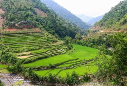 Rice terraces on slopes is a common view in the far north
