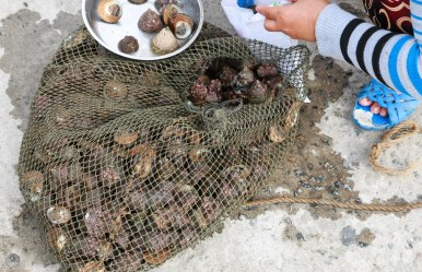 Fresh mussels and snails on offer in the village