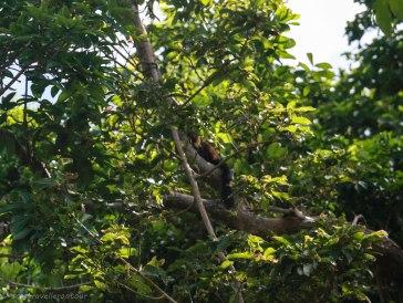 Spot the local black squirrel