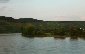 Some wine fields next to the river