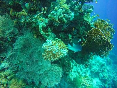 Colourful underwater world