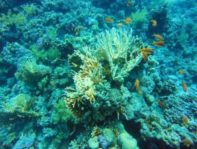 Corals and fish - you cannot ask for more...