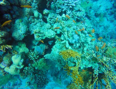 Even the corals are hugely different