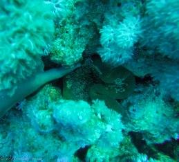 An octopuss is hiding