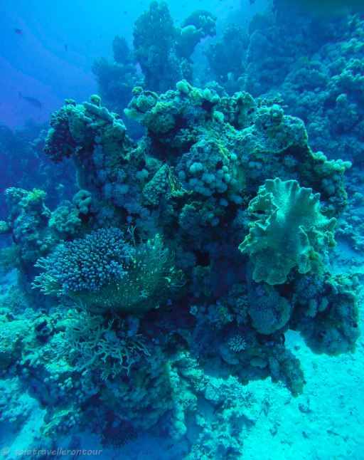 The Red Sea offers a stunning underwater world