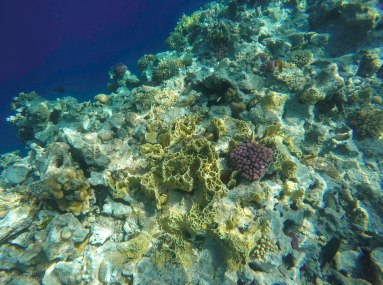 The corals were close to the surface