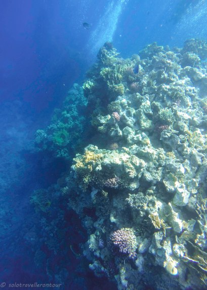 Little path amongst the corals