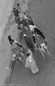 Camel rides along the street