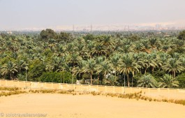 Some green between Cairo and the desert