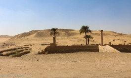 Ruins, desert and palm trees - this is what you imagine to see near the pyramids