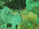 Tiny sea cucumber
