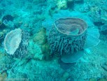 Some corals had a strange shape like a vase or volcano