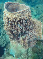 Sea Cucumber gathering