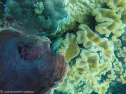 Great contrast of the different corals - and fish