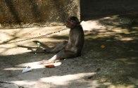 Poor little monkey