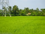 At least I saw more rice fields